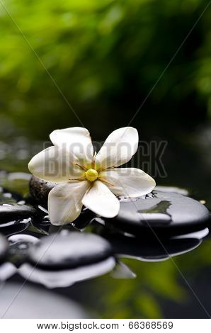 Spa still with gardenia flower on pebbles