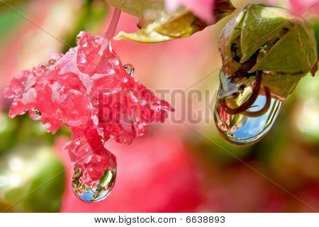 Water Droplet Refractions