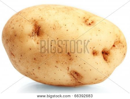fresh potato isolated on white