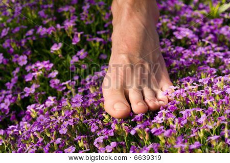 Healthy feet - feet and flowers