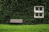 stock photo of ivy  - Windows and walls are covered with ivy look elegant and classic look - JPG