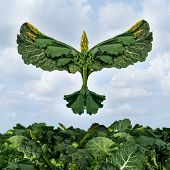 pic of leafy  - Health food freedom diet concept with green vegetables and dark leafy food shaped as a bird flying upward as a healthy eating symbol of the power of fresh garden produce organically grown as an icon of natural nutrition as kale swiss chard spinach collard - JPG