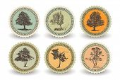 stock photo of boy scout  - Set of bio labels with trees - JPG