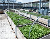 foto of photosynthesis  - Growing vegetables on roof of urban building