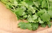 stock photo of horticulture  - fresh coriander or cilantro on wooden board isolated on white - JPG