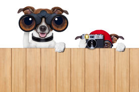 pic of snoopy  - father and son dogs spying behind wood fence with camera and binoculars - JPG