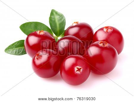 Ripe cranberry on a white background