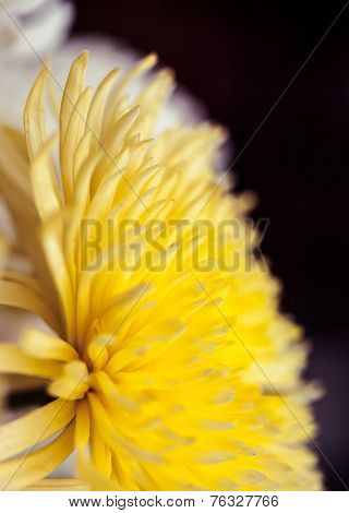 Close up of flower, shallow DOF artistic toned photo with space for text
