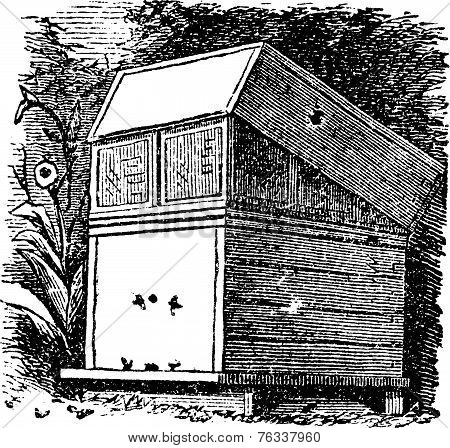 Beehive Or Beehives Vintage Engraving