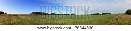 Summer panorama of green field and blue sky.