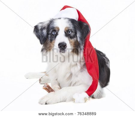 Australian Shepherd Stocking Cap