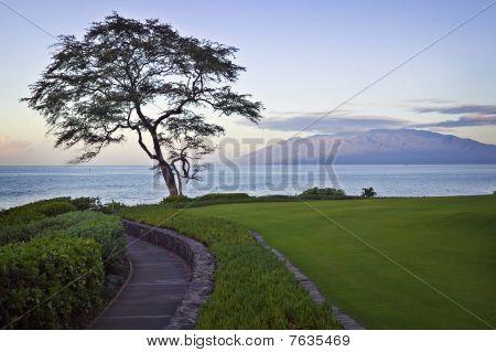 Walking Path, Maui Sunrise
