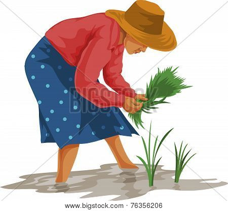 Vector Of Woman Working In Farm.