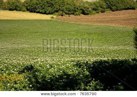 Prados e campos em um vale andino