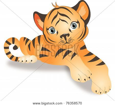 Tiger, Illustration