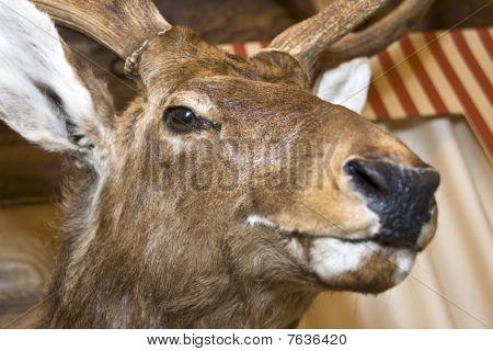 Deer. Stuffed Animal