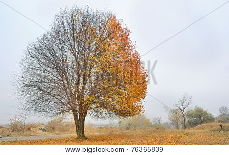 Autumn Cherry Tree
