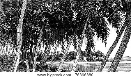 Isthmus Of Panama. The River, Vintage Engraving.