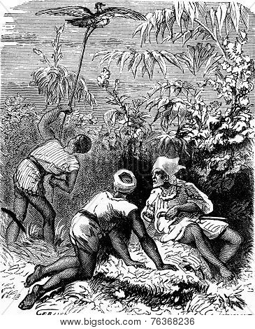The Dramas Of India. In The Thick Tall Grass, Three Indians, Vintage Engraving.