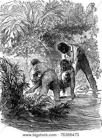Dramas Of India. Human Feeling Inspired Them A Rescue Attempt, Vintage Engraving.