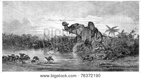 Salon Painting. Elephant Attack By Two Lions, Vintage Engraving.