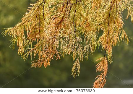 Sunny Autumn Leaves