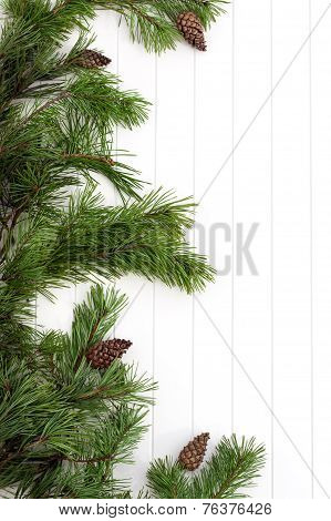 Spruce Tree Branches Frame, Evergreen Garland