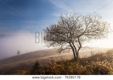 Lonely Tree In Autumn