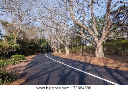 Scenic Road Residential Trees