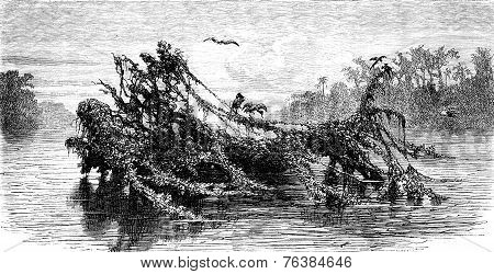 Floating Islands, Vintage Engraving.