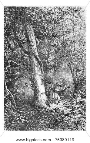Chopping Down A Tree Using A Hand Axe In Oiapoque, Brazil, Vintage Engraving