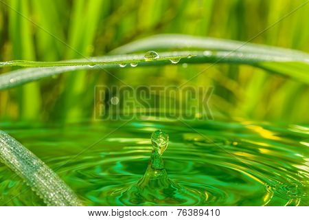Water Droplets From Green Leaves Of Grass