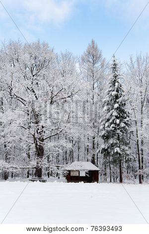 idyllic forest in winter