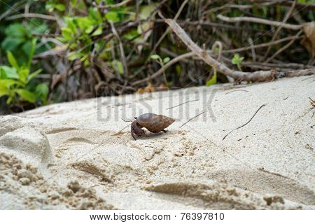 Side View of Hermit Crab Crawling on Sand