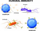 stock photo of immune  - humoral immunity - JPG
