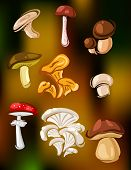 stock photo of agaricus  - Colorful set of vector mushrooms and fungi showing edible agaricus - JPG