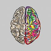 foto of left brain  - Creative brain with color strokes vector illustration - JPG
