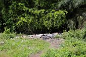 image of landfill  - Landfill between trees and palms in Africa - JPG