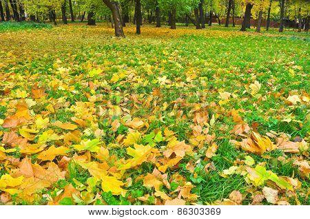 Autumn Park In Fallen Leaves.