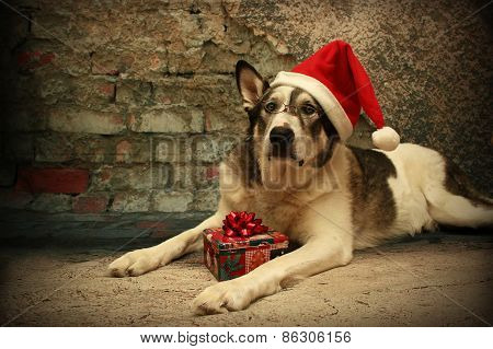 Malamute Dog In A Santa Hat