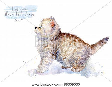 Little fluffy kitten Spotted cat.