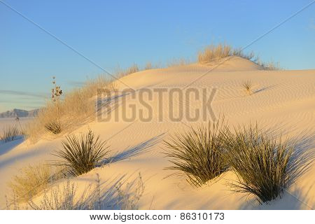 Desert Sand Dune in Early Morning Light