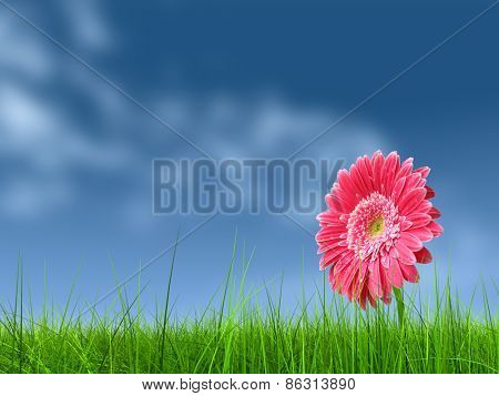 Concept or conceptual green fresh summer or spring grass field and a flower over a blue sky background