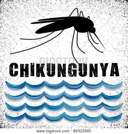 Chikungunya, Mosquito, Standing Water