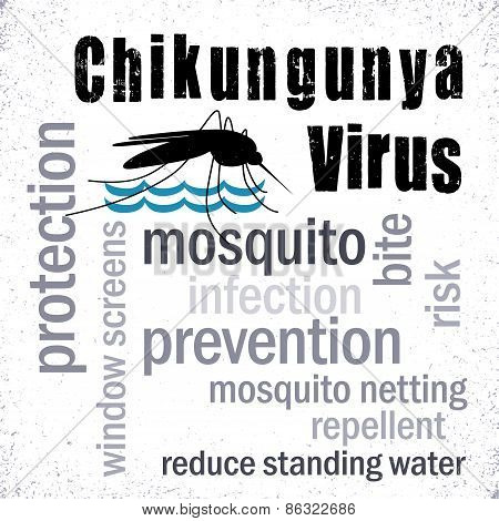 Chikungunya Virus, Mosquito, Word Cloud