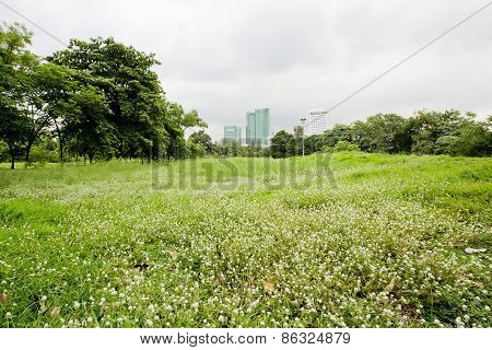 Spring And Summe With Green Grass And Small White Flowers