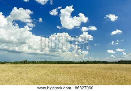 Fluffy Clouds And Deep Blue Sky Above Ripening Farm Field