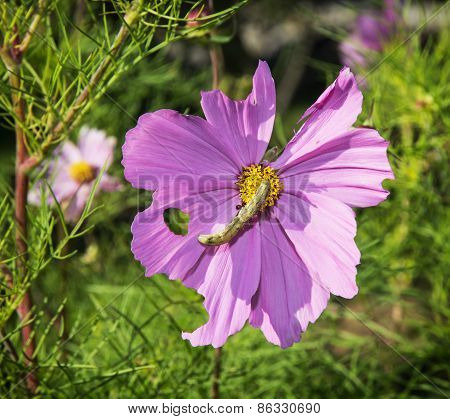 Insect On The Purple Flower
