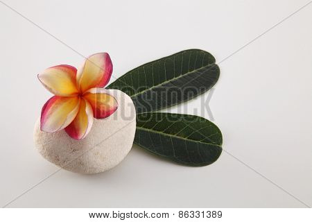 frangipani with leaf on top of the stone