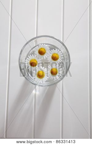 five daisy in a glass with water